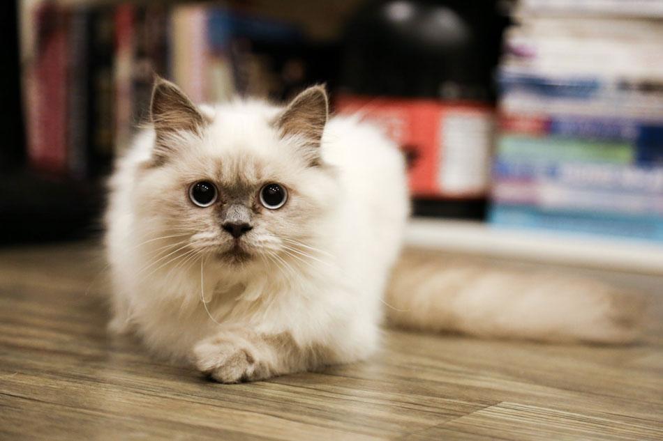 pet-friendly-laminate